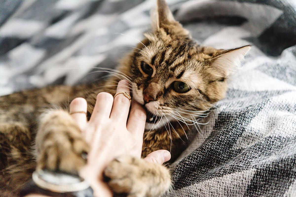 Bei Katzenbissen: Ab zum Arzt, © Bogdan Sonjachnyj/Shutterstock.com