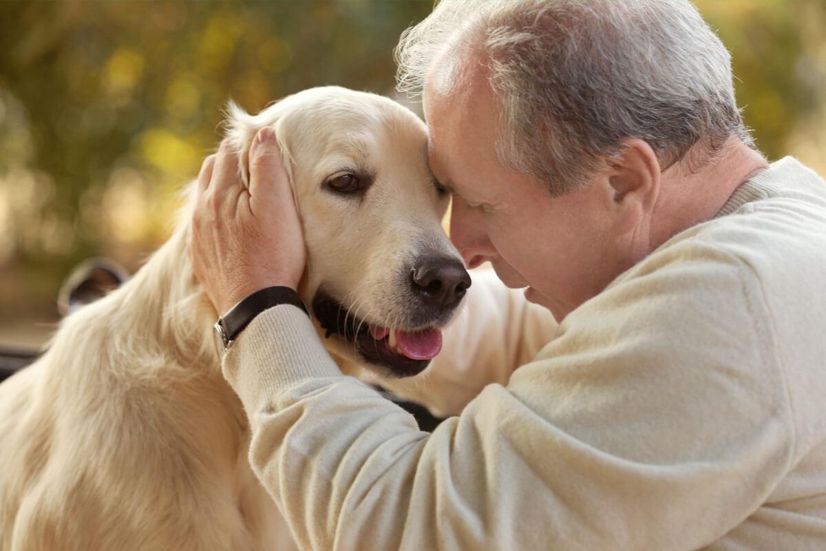 Hund schützt Herz, © Africa Studio/Shutterstock.com