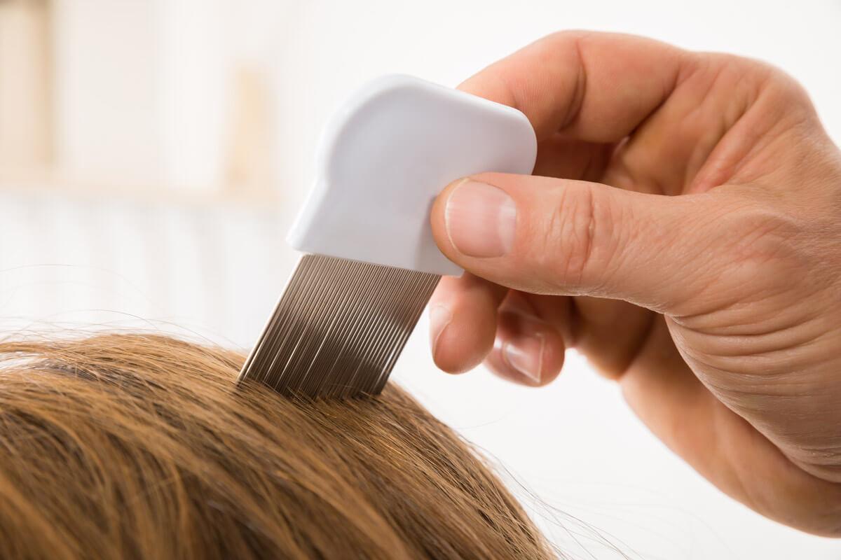 Mit einem speziellen Läusekamm lassen sich die Kopfläuse ausbürsten.