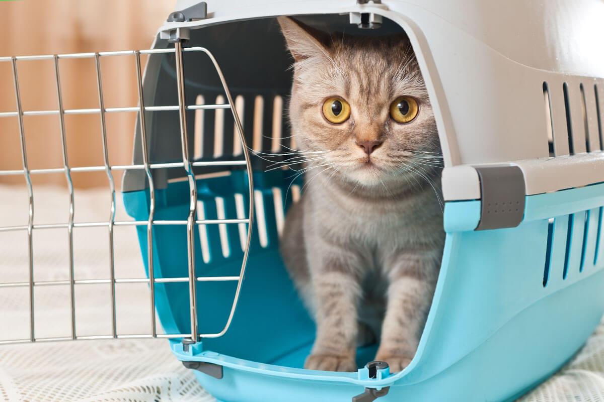 Mit Haustier in den Urlaub reisen, © Oleg Batrag/Shutterstock.com