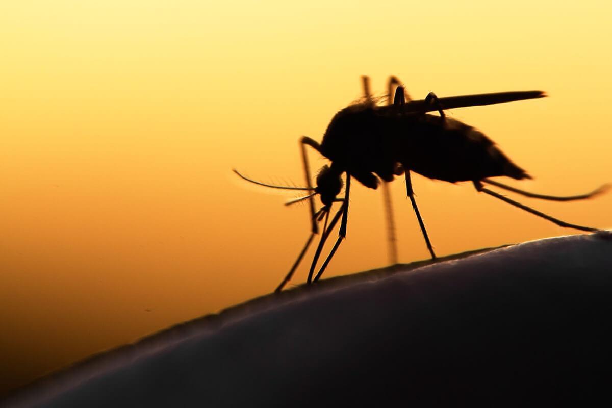 Malaria im Urlaub vorbeugen, © mycteria/Shutterstock