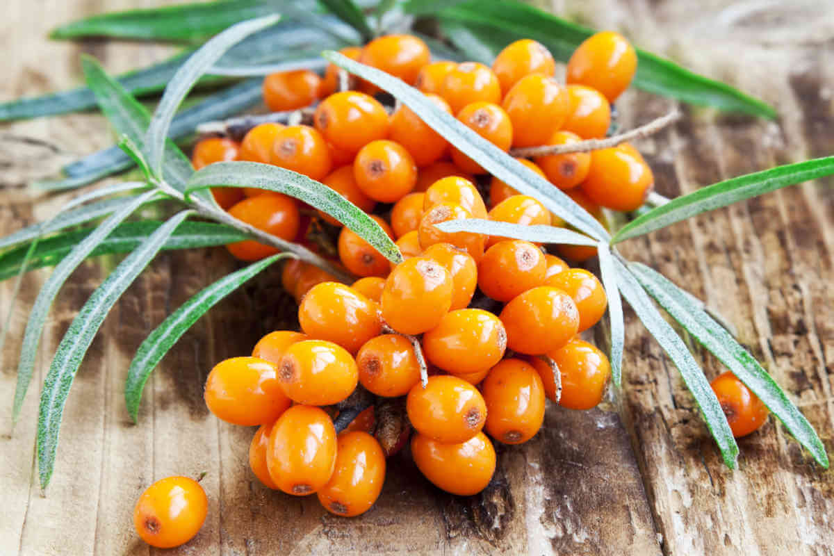 Nahrungsergänzung im Blick: Vitamin C, © catalina.m/Shutterstock.com