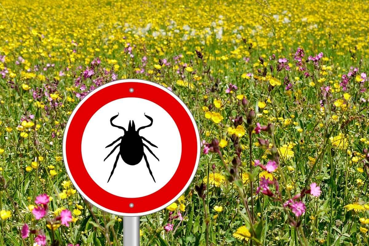 Neue FSME-Risikogebiete benannt, © Schlegelfotos/Shutterstock.com
