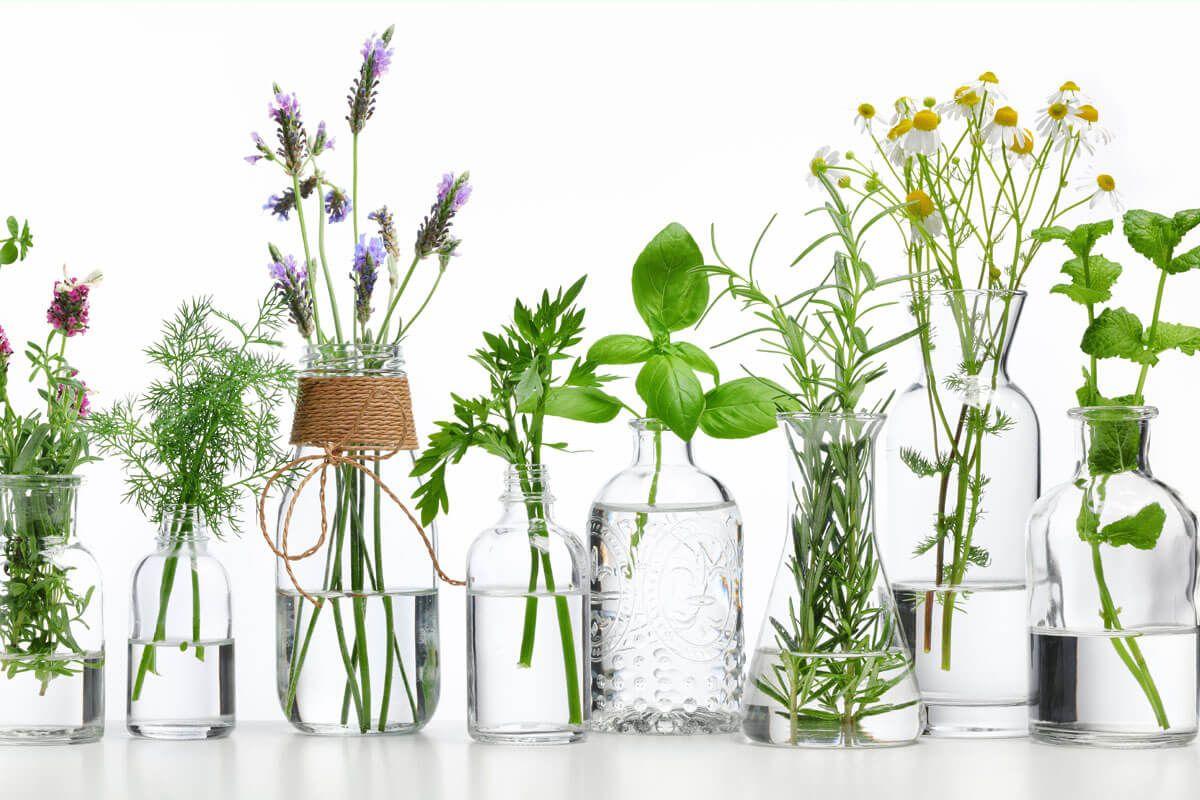 In Komplettauszügen wirken die Inhaltsstoffe der Heilpflanzen optimal zusammen und entfalten ihre Kraft.