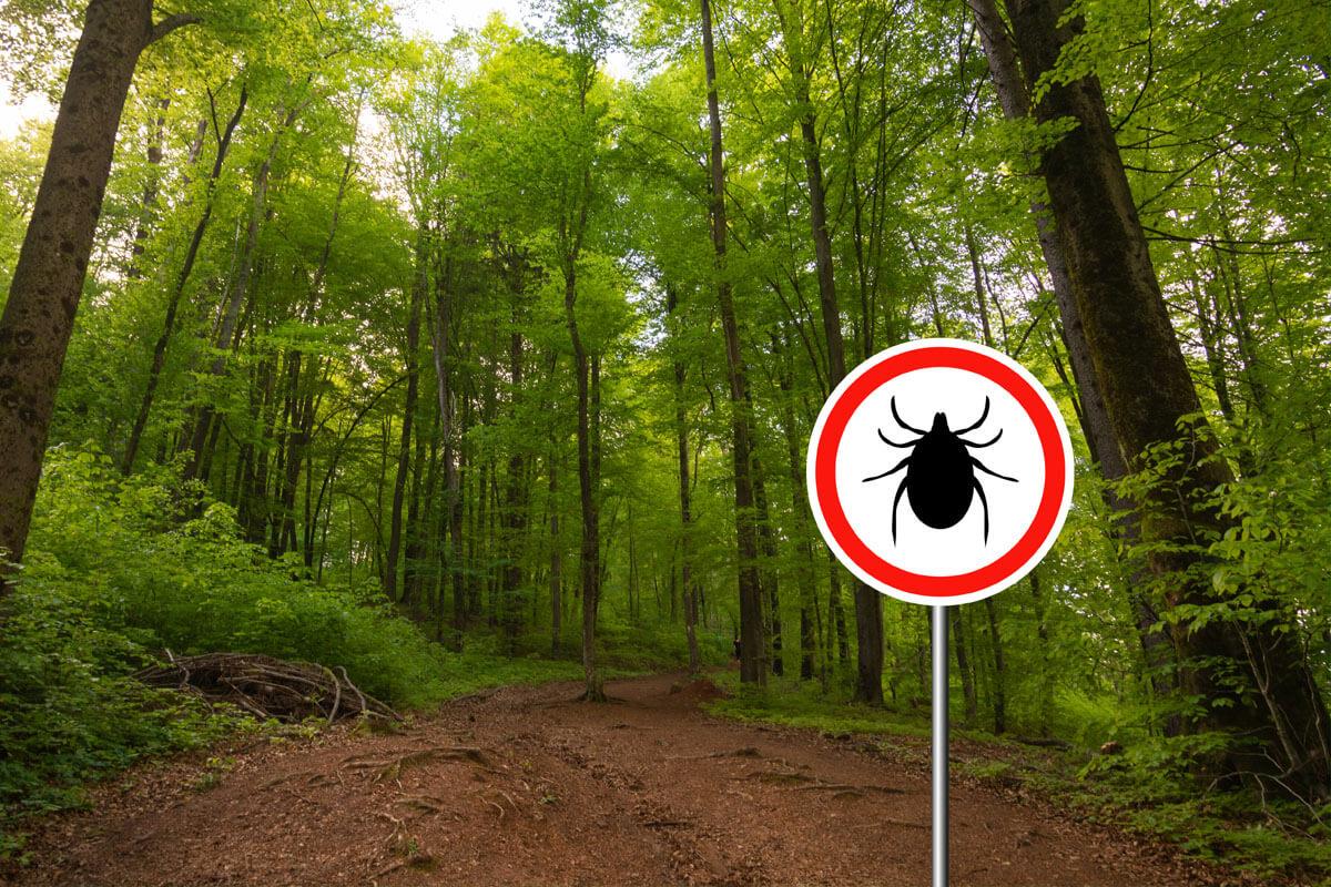 Risikogebiete: Hier droht FSME, © grejak/Shutterstock.com