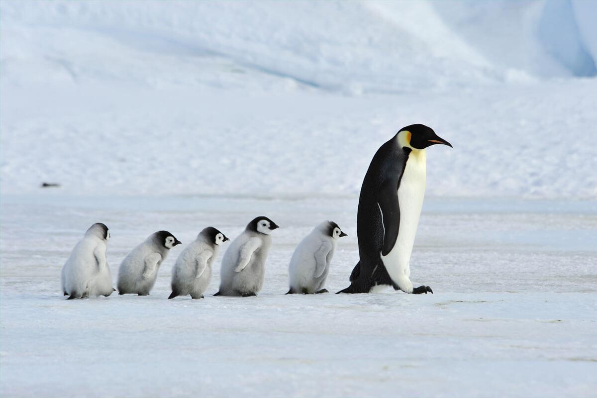 Sicher unterwegs bei Eis und Schnee, © fieldwork/Shuttterstock.com