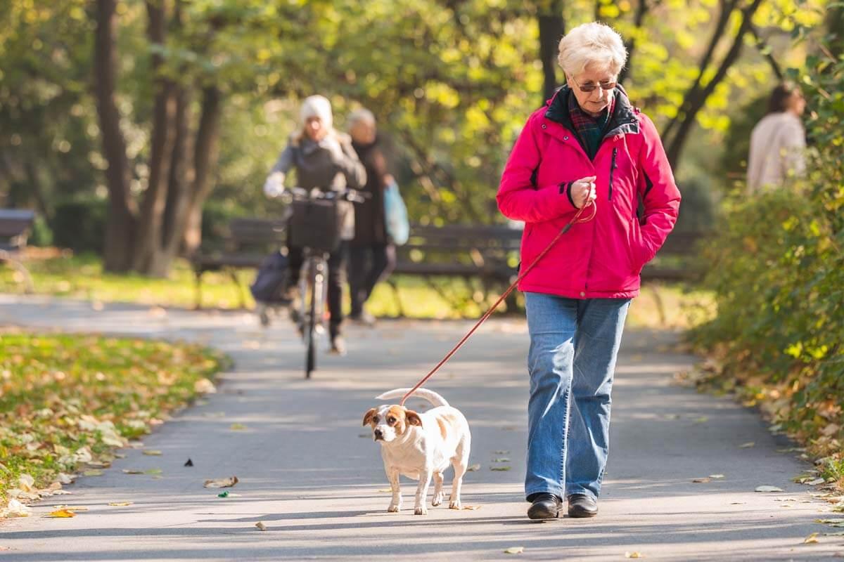 So bringt Ihr Hund Sie nicht zu Fall, © Fotokostic/Shutterstock.com