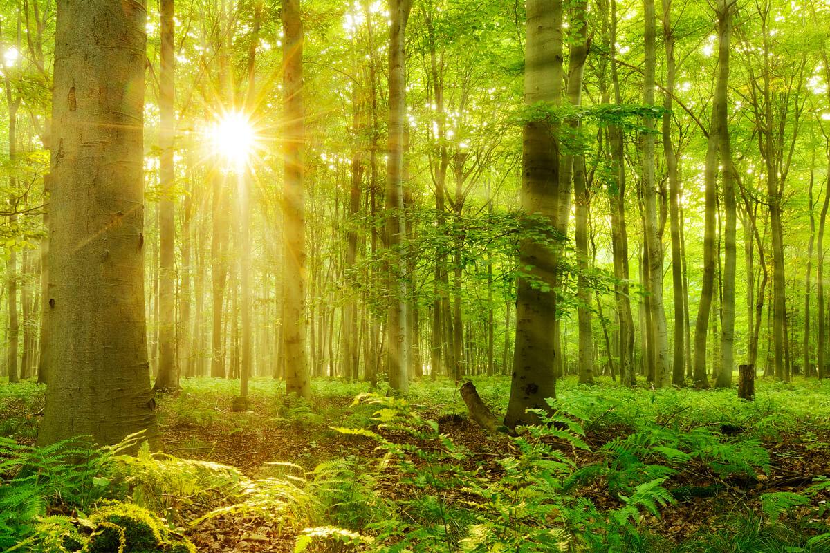Waldbaden als Therapie, © dugdax/Shutterstock.com