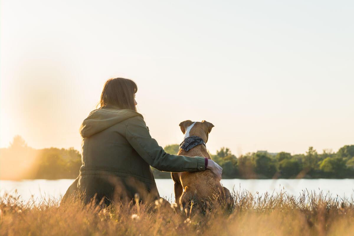 Wie gut schnüffeln Diabeteswarnhunde?, © Aleksey Boyko/Shutterstock.com