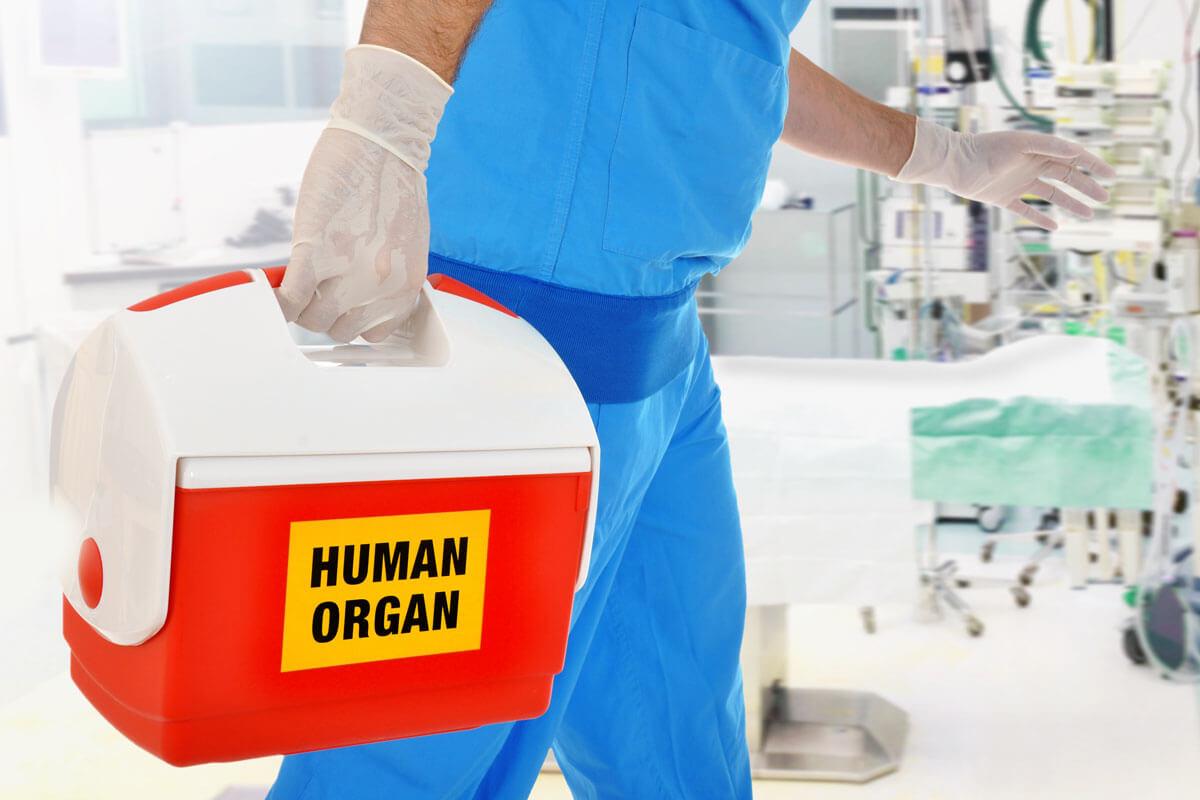 2020: So viele Organe wurden gespendet, © Dan Race/Shutterstock.com